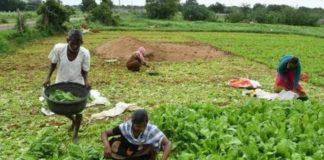 Pakistani farmers property in India