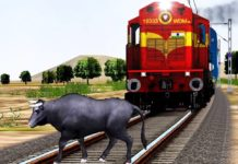 the train collided with the bull