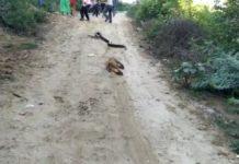 battle of snake python and monkey