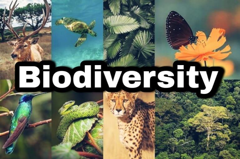 biodiversity hotspots in india